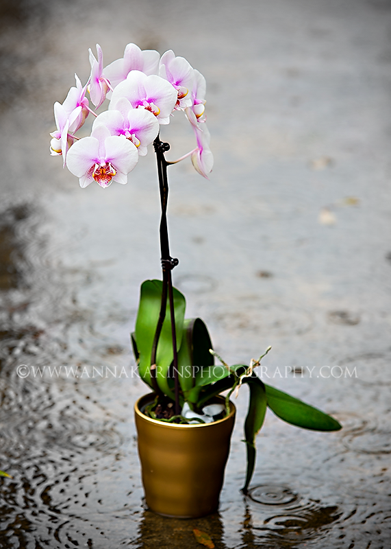 Orchid, bright colors in dreary rain, Fine art photographer Baton Rouge