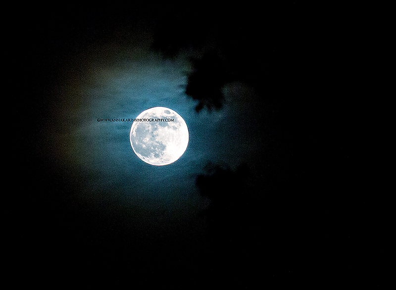 supermoon behind trees, summer super moon 2013