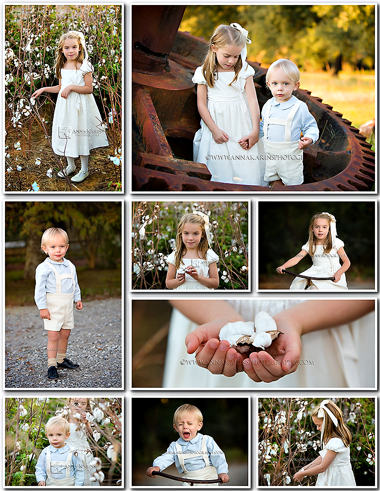 Cotton Blooms, cotton bloom pod, Beautiful plantation photo session- Rural Life Museum Baton Rouge, gorgeous sibling photographs