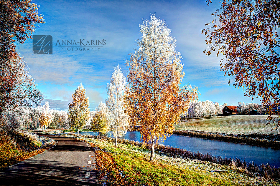 Country side in Sweden, first frost of the winter, ice and frost covered trees,