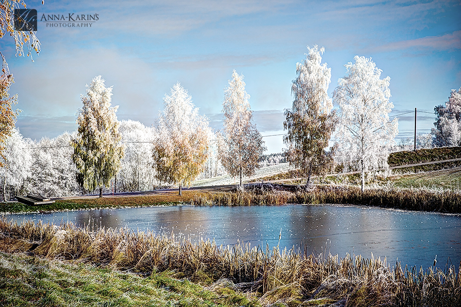 first freeze on a lake, frost covered winter trees,